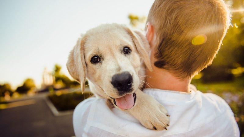 Comment bien assurer mon chien ?