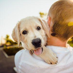 Peut-on se faire rembourser les frais de santé d'un chien ?